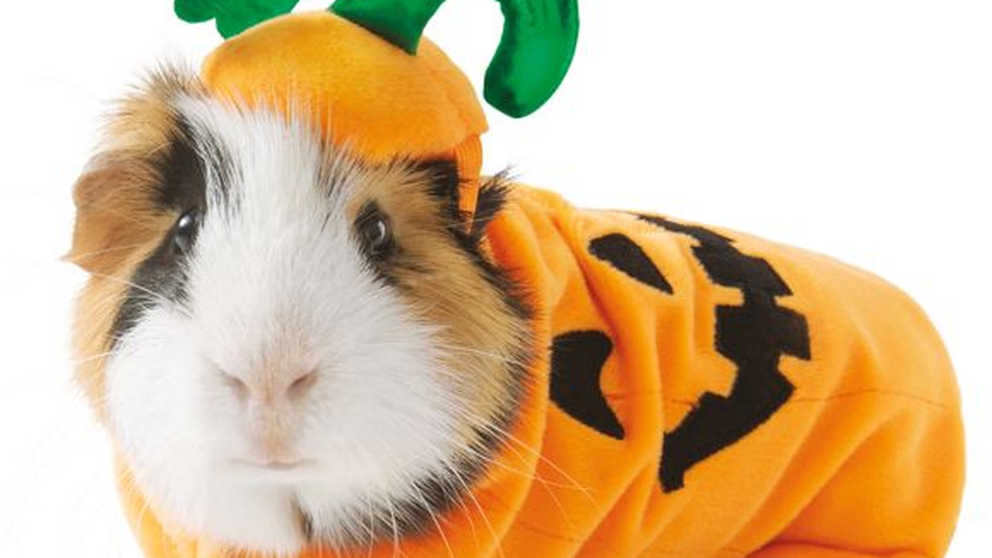 Guys... They Make Halloween Costumes For Guinea Pigs
