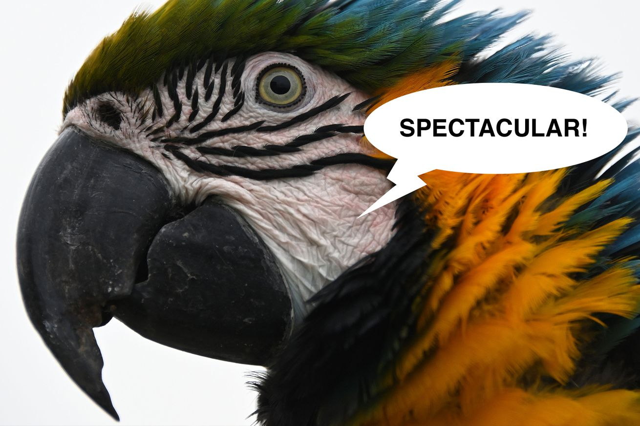 SpecatularBird.0 - The Brazilian Head-Parrot, and other Sports Birds