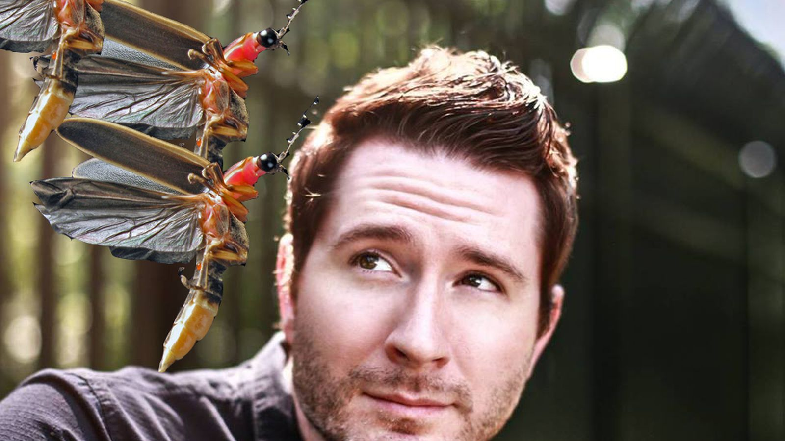 Fact-checking Owl City's description of being hugged by 10,000 fireflies