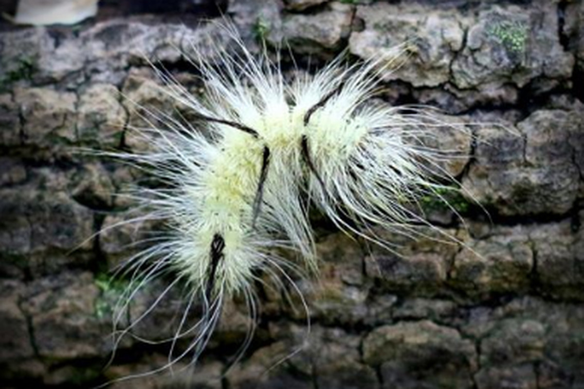 This fuzzy, cute caterpillar can literally poison you. Here's what you should know