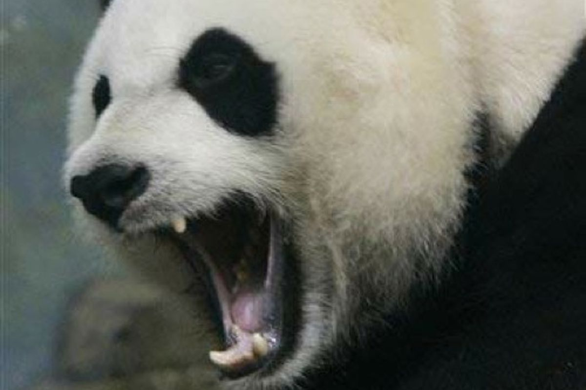 """via <a href=""""http://www.forkparty.com/wp-content/uploads/2010/02/angry-panda.jpg"""">www.forkparty.com</a>"""