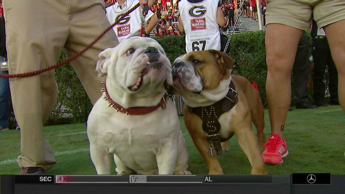 Mississippi State vs  Georgia: Two bulldog mascots together