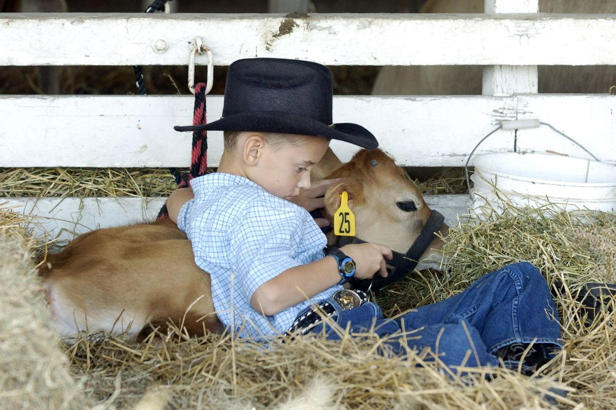 Kansas Fair Draws Fans Of Rodeo, Food, And Fun