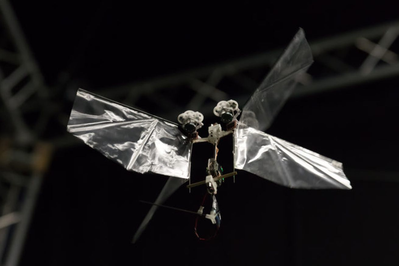 the delfly nimble robot can fly like a real insect