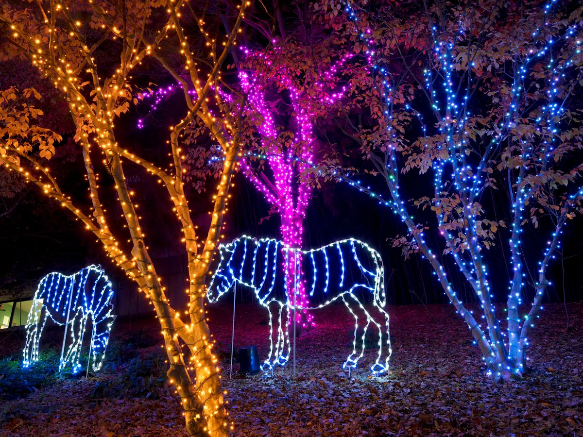 Animal lights at a zoo. Trees are also lit up.