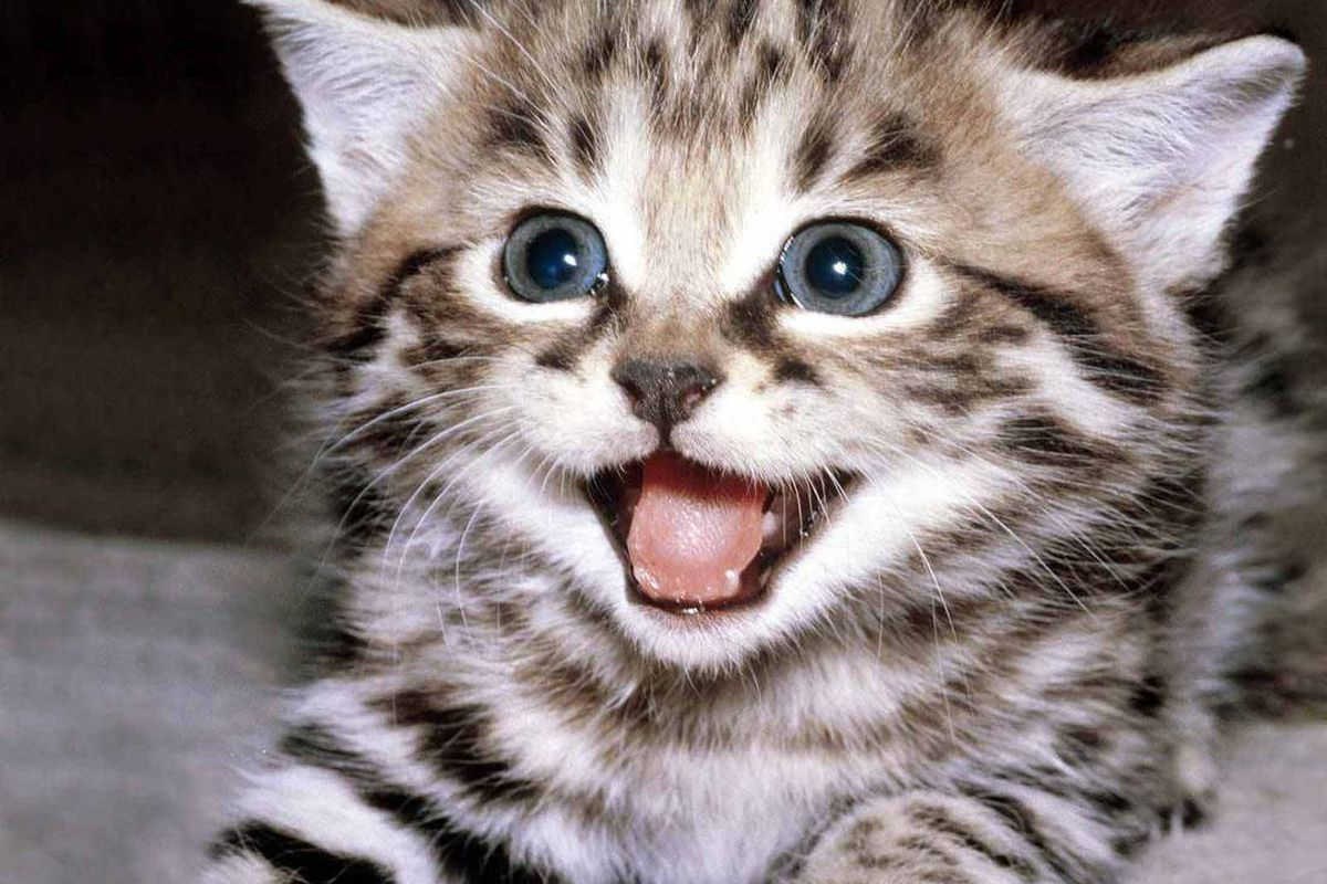 I have literally no relevant images that aren't soul-destroying. So here's a picture of a happy kitten.