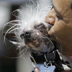Dane Andrew of Sunnyvale, Calif., kisses his dog, Rascal, a Chinese crested, before the start of the World's Ugliest Dog Contest at the Sonoma-Marin Fair Friday, June 23, 2017, in Petaluma, Calif.