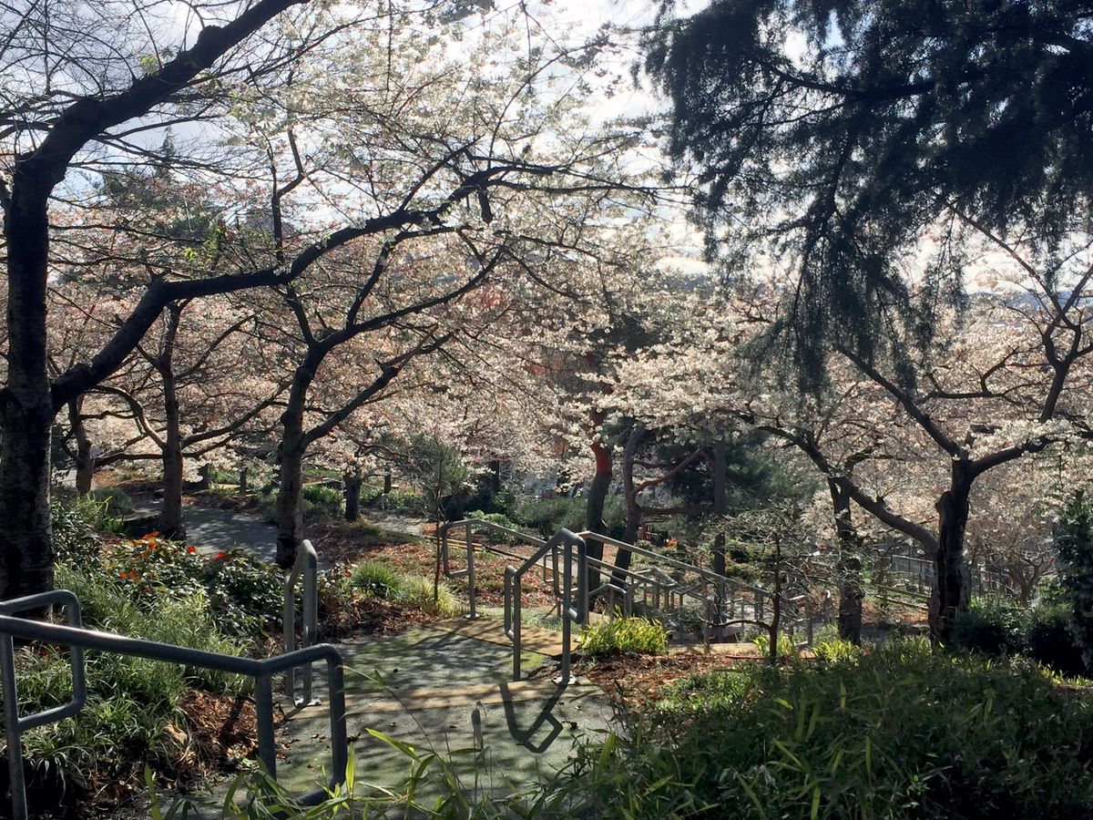 A path in Kobe Terrace Park in Seattle. There are plants and trees with multicolor blossoms on both sides of the path.