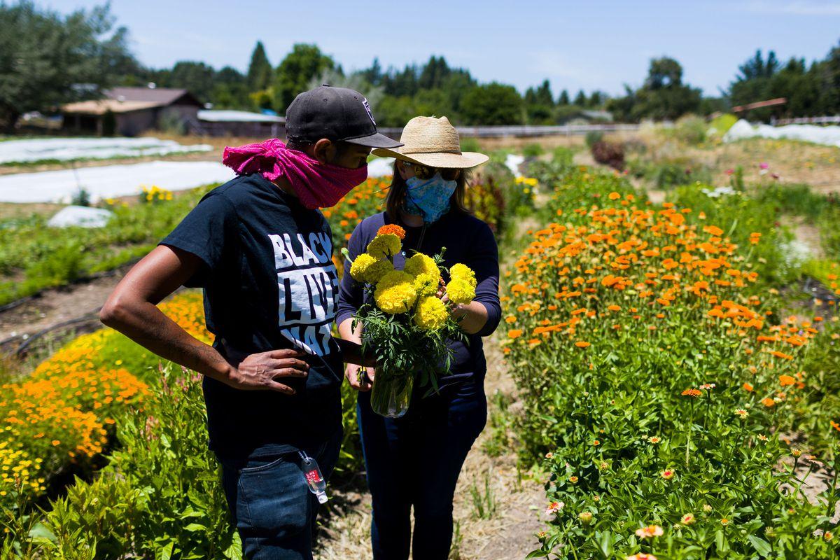 Mistry (esquerda) colhendo flores na fazenda