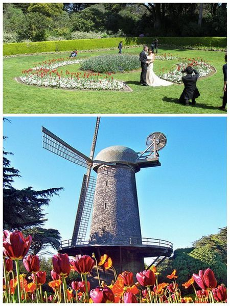 Queen Wilhelmina Tulip Garden 1690 John F Kennedy Dr San Francisco 415 813 1445 Outdoor Lovers Who Want To Stay Within City Limits Cant Go Wrong