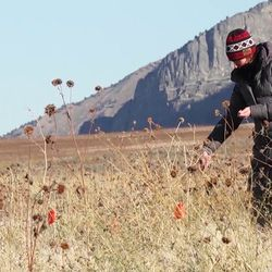 Maggie Eshleman, who supervises a lab for The Nature Conservancy, scatters the black seed pods containing seeds from sagebrush and grasses on an experimental plot near the northern Utah town of Honeyville.
