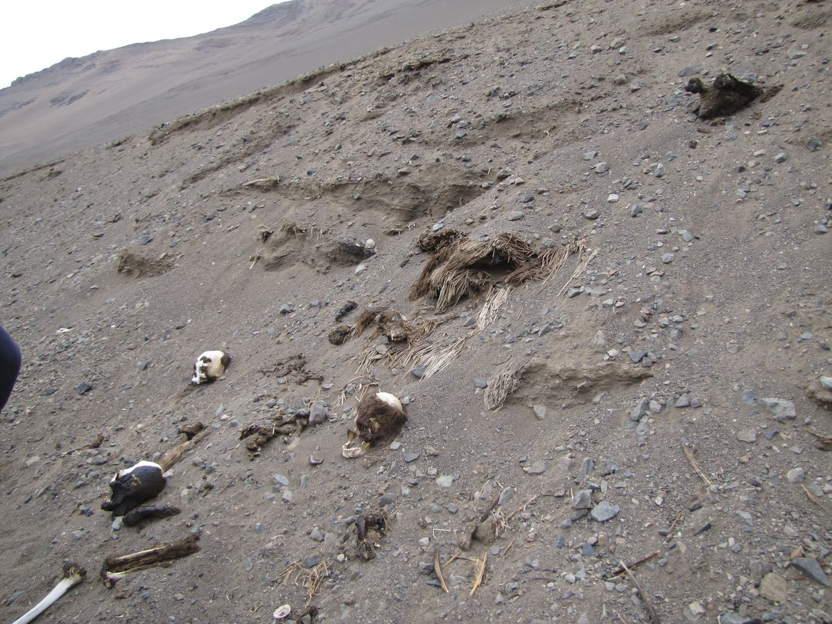 This photo taken in the valleys in of northern Chile captures the massive number of mummies buried in the sand.