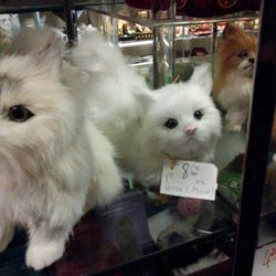 """This cute kitty is just begging to be taken home. She may not be real but apparently she can talk. """"Meow!"""""""