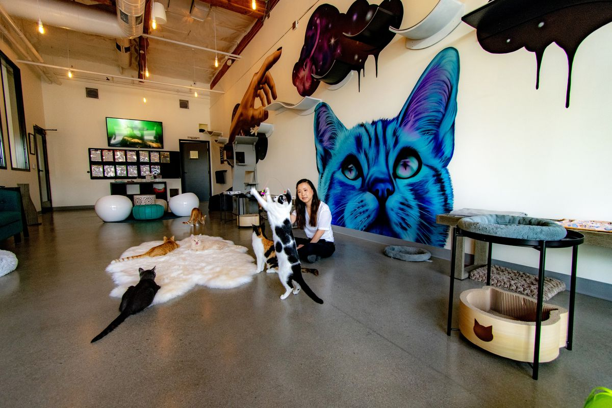 North County S First Cat Cafe Opens This Weekend Eater San Diego