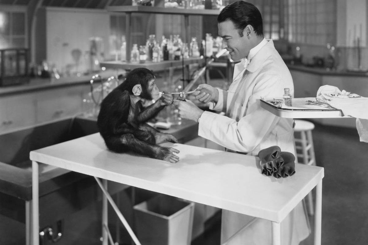 Monkeys have been subjects of research for years.