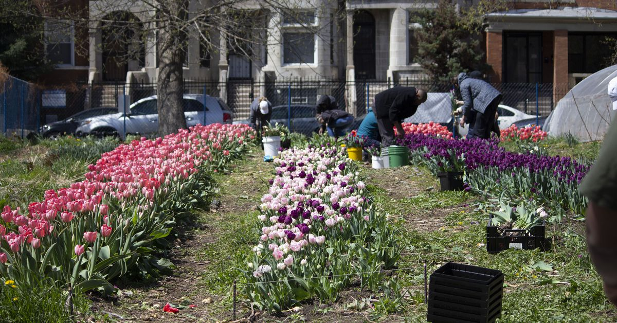South Side flower shop offers jobs and training for at-risk youth