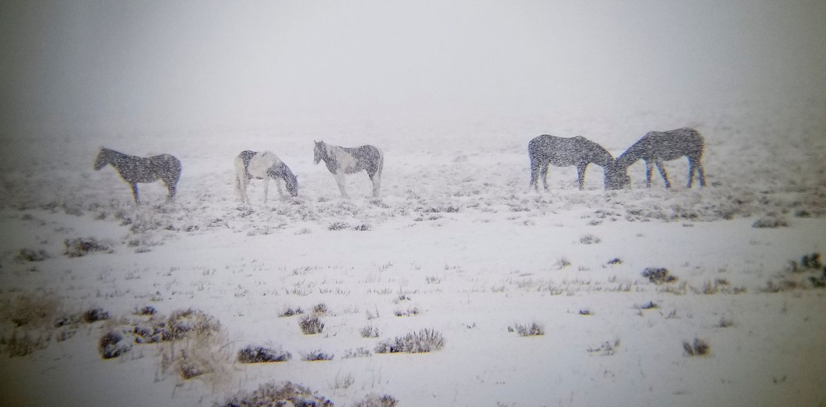 Horses eat out of protein tubsBeaver Countyon Monday, Jan. 21, 2019.