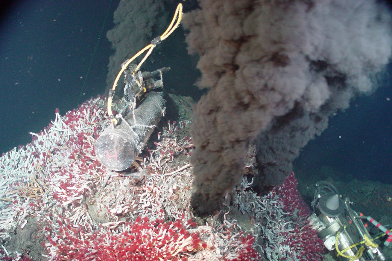 deep sea mining could find rare elements for smartphones but will it destroy rare species