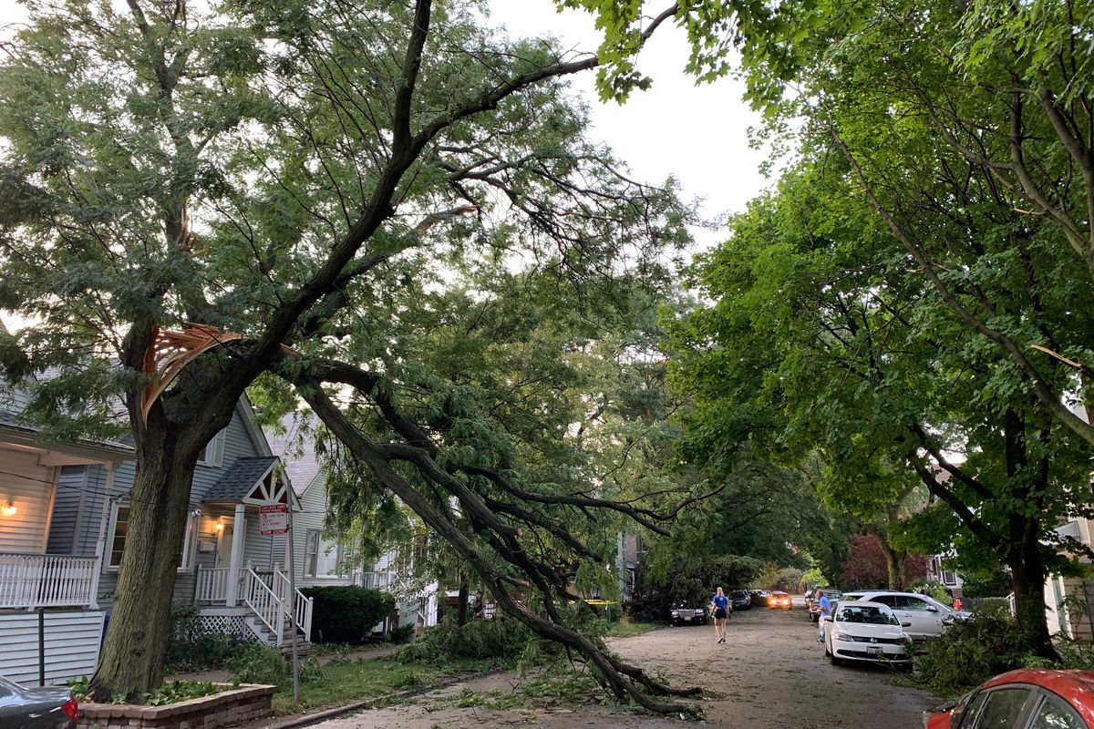 This tree on North Paulina Street in Lake View was split by Monday's storm.