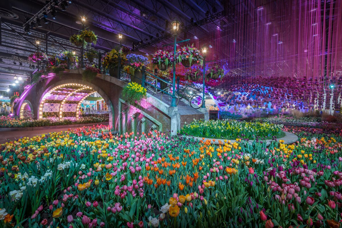 display of colorful tulips with an arch bridge behind them