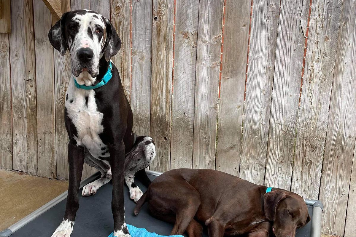 The company was preparing to bring the three dogs home from daycare when their vehicle was stolen.