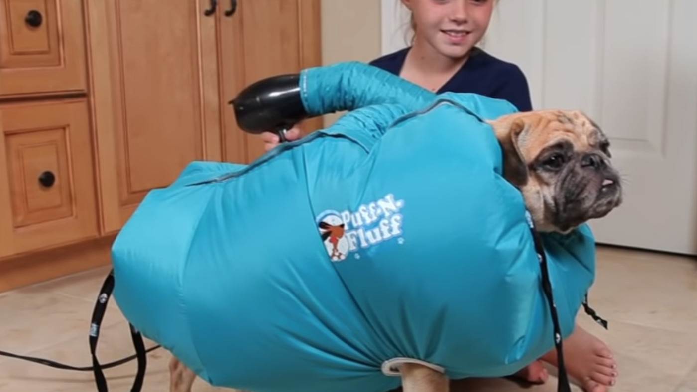 Hair Dryers For Dogs Are A Thing And I... Am Crying