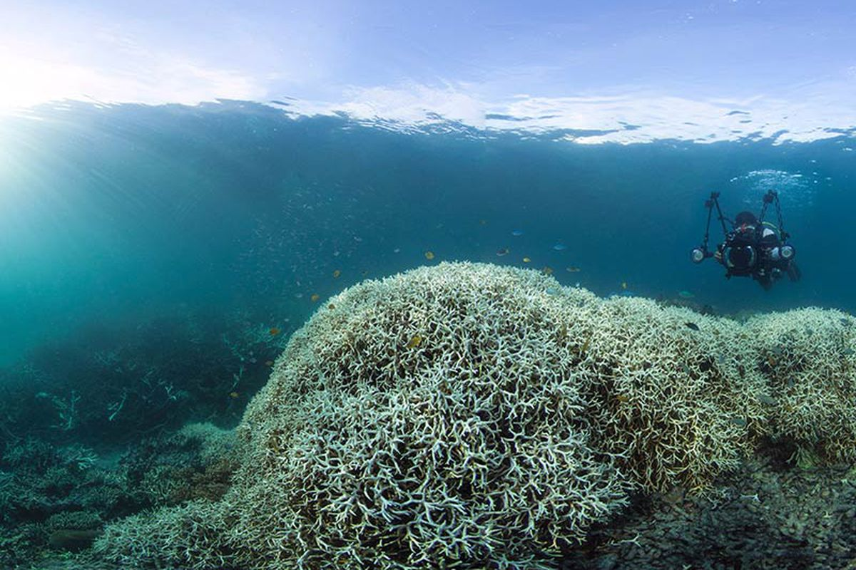 The Great Barrier Reef Has Suffered The Worst Coral Die Off