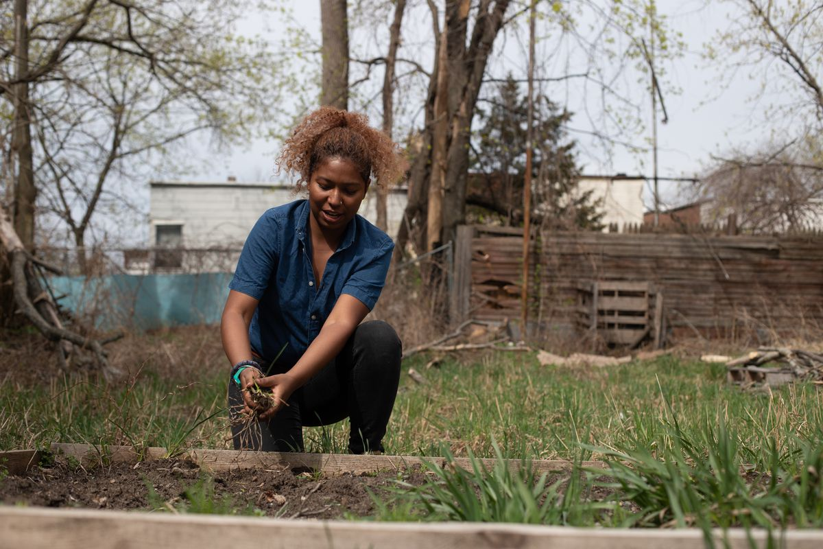 A person with their hair in a ponytail lifts a plant from a plot of dirt