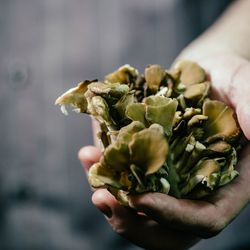 Instead of using the traditional flat fungi, Dilda's English breakfast features maitake, or hen of the woods mushrooms.