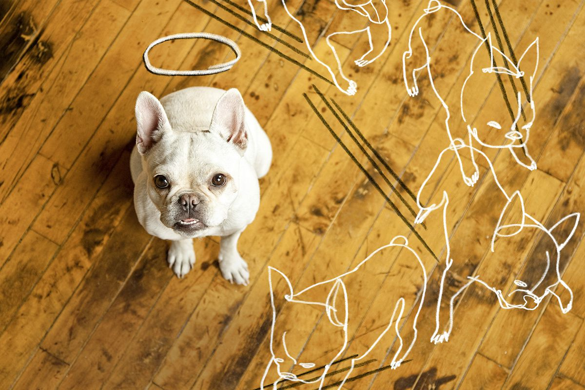 How To Repair Dog Damage To Wood Flooring This Old House