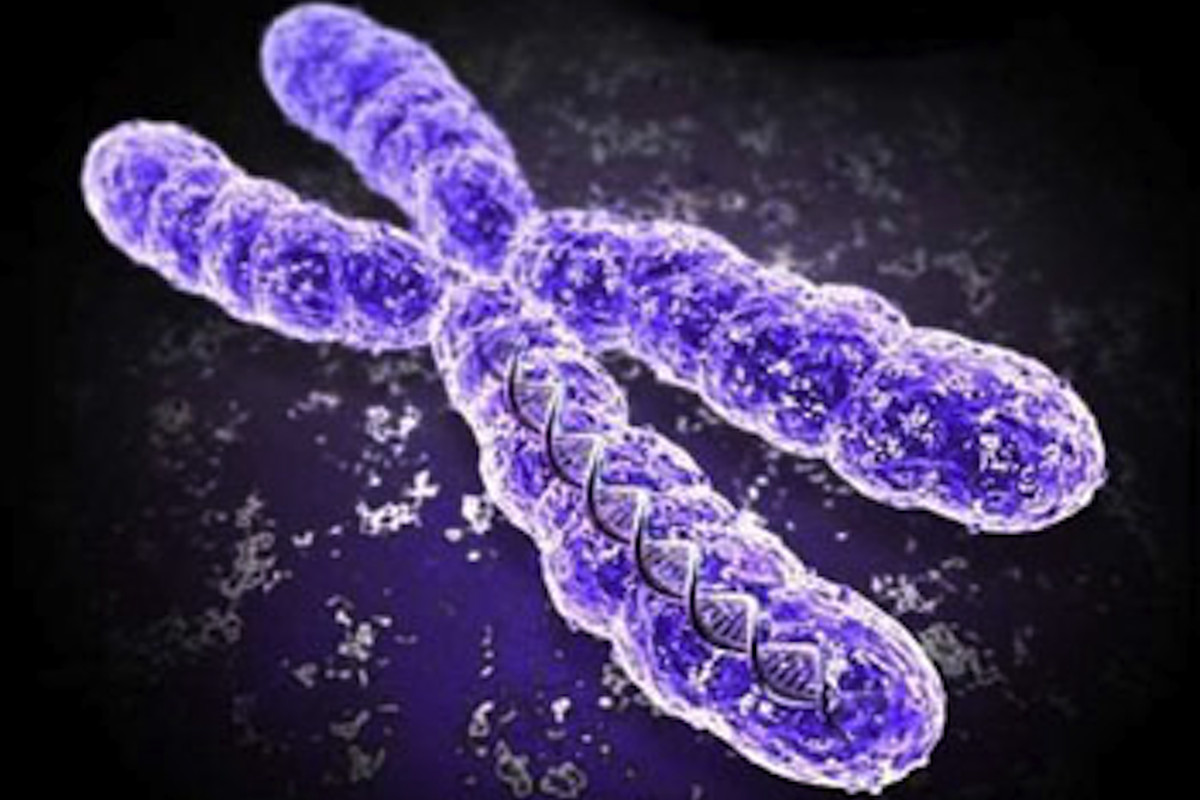 X doesn't mark the spot: real shape of chromosomes ...