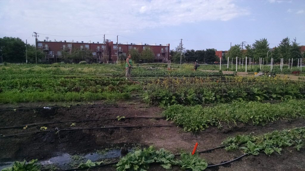 An urban farm now sits on some of the land that was home to Stateway Gardens.