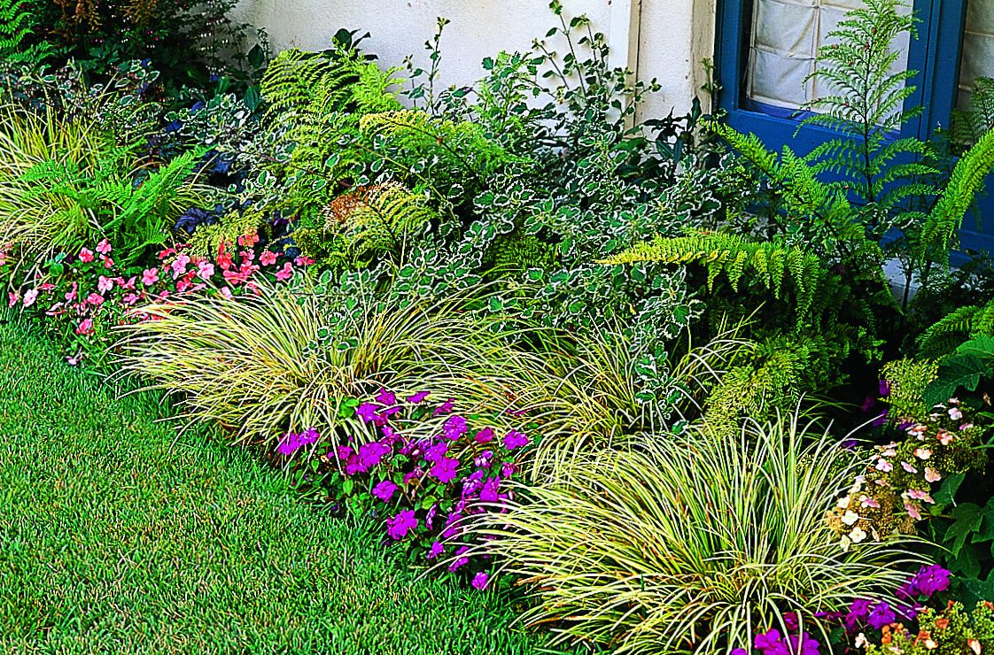 Variegated Wintercreeper, Ferns, Grasses And Impatiens