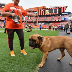 February 2020: This year has sucked for many, and that included the sudden and unexpected loss of Swagger, the team's mascot who retired during the 2019 season. The family who owned Swagger later said that the dog had cancer in 2019, but an unexpected stroke took his life in February. RIP, Swagger. <3