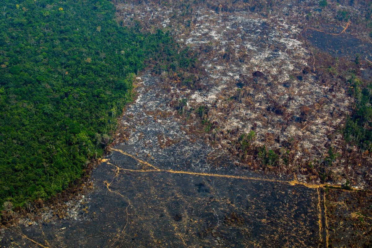 Amazon Rainforest Deforestation At Highest Rate In More Than A