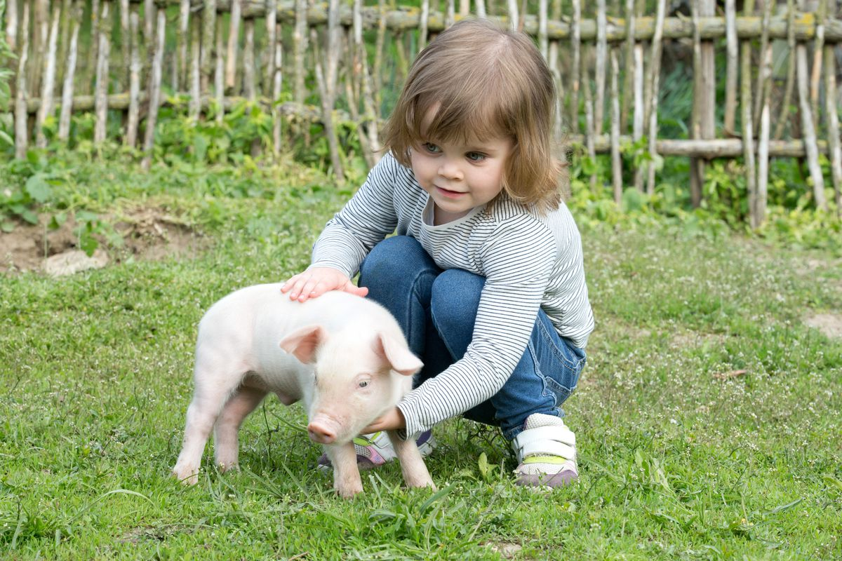 A little girl with a little pig