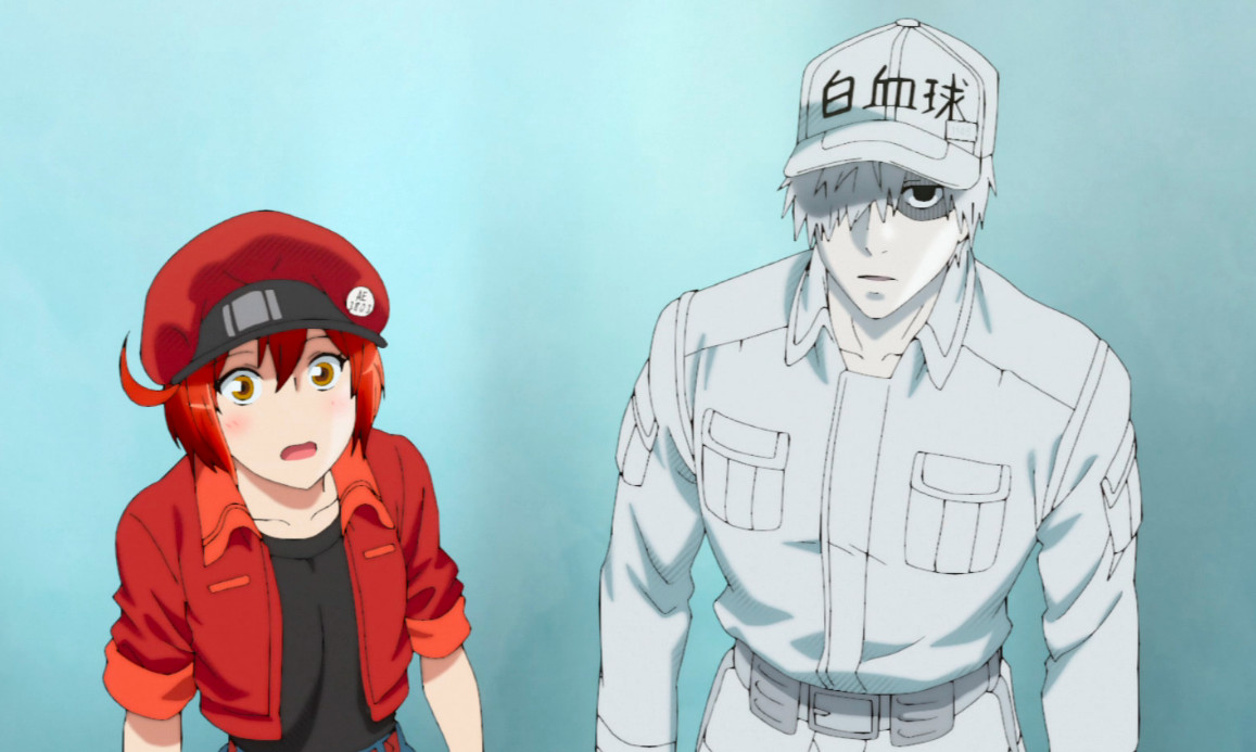 Red Blood Cell and White Blood Cell standing together.