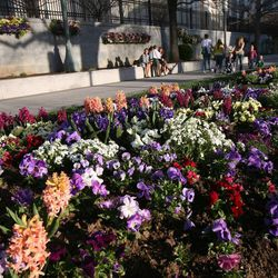Flowers around Temple Square during General Conference in Salt Lake City on Saturday, April 6, 2013.