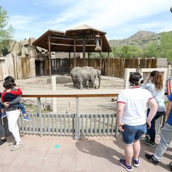 People practice social distancing while standing on green dots during a visit to the Hogle Zoo in Salt Lake City on Saturday, May 2, 2020. The zoo reopened to guests after closing because of the COVID-19 pandemic in March. It has new regulations in place to help avoid the spread of the virus.