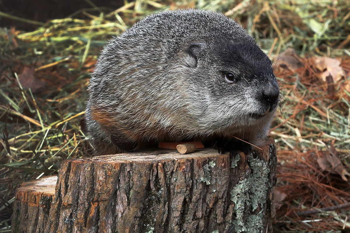 Groundhog Day in Lincoln