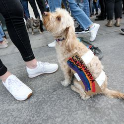 Rosie, a Maltese-poodle mix, joins LGBT supporters outside The Church of Jesus Christ of Latter-day Saints' Church Office Building in Salt Lake City on Friday, March 6, 2020, during a protest of the honor code at the faith's universities.