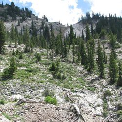 23. Looking back at Davenport Hill, hikers make their way down Silver Fork.