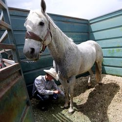 Dawson Zaharias takes care of Butch between sessions of the Utah High School Rodeo Finals at the Wasatch County Events Complex in Heber City on Thursday, June 1, 2017.