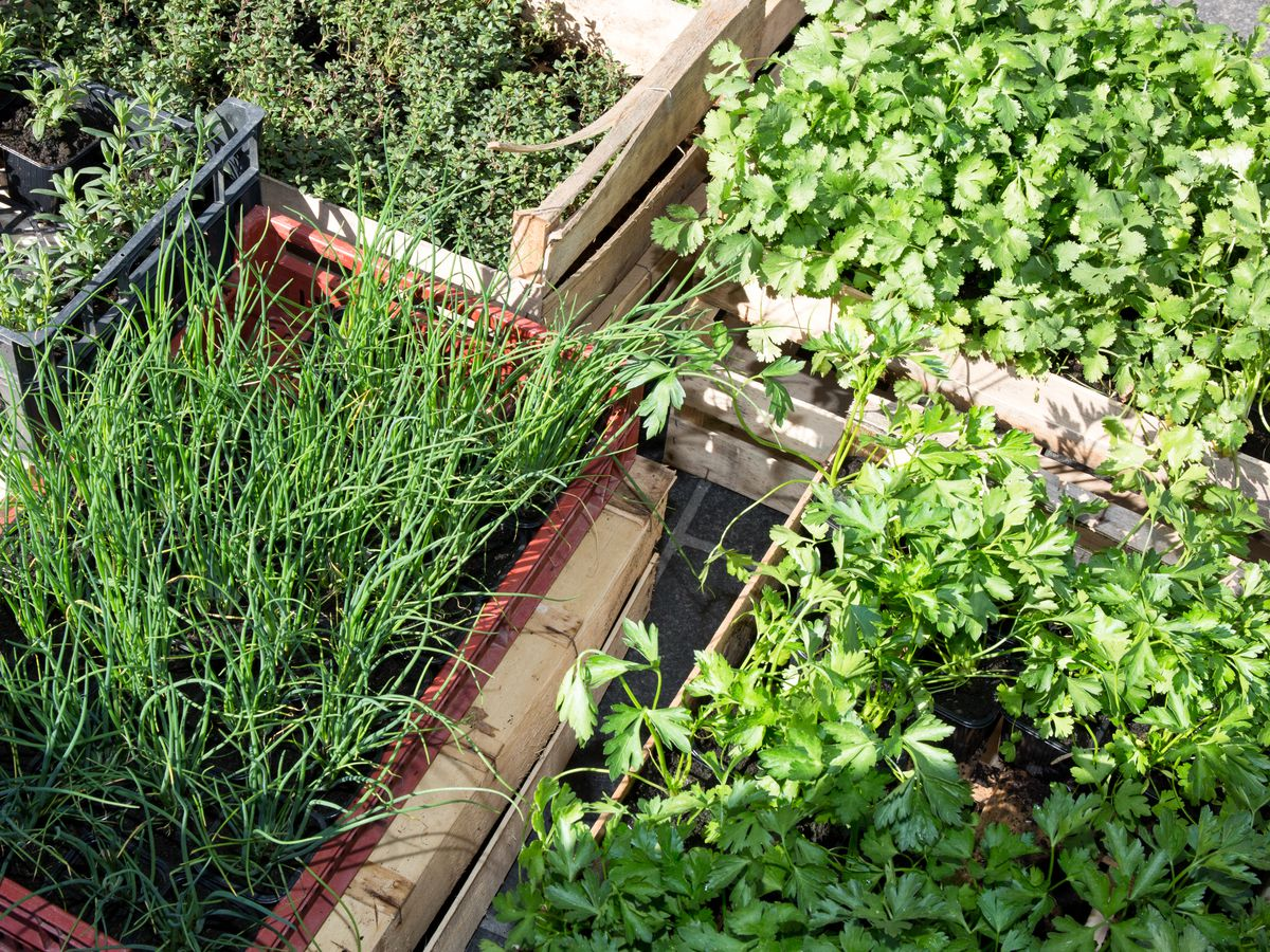 Boxes of herbs and produce at a market.
