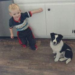 """Arianne Brown's son Audi plays with the family's dog Aleven (eleventh member of the family; """"Stranger Things"""" fan; all A's"""" ... get it?)"""