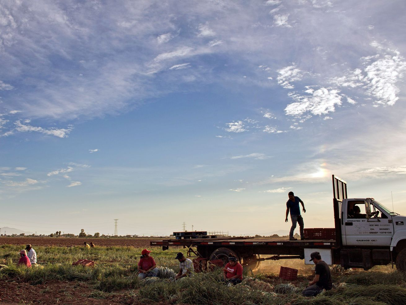 Farm workers harvest near the US-Mexico border in Baja California.