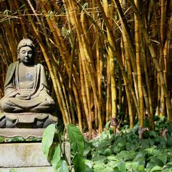 An image of a Buddha stands amid bamboo at the Allerton Garden on Kauai, Hawaii on March 23, 2007.