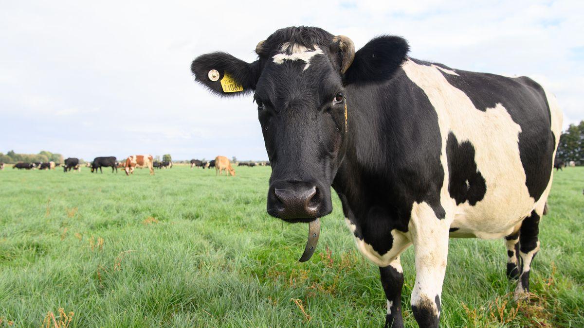 Agricultural Society Emster-Land mbH