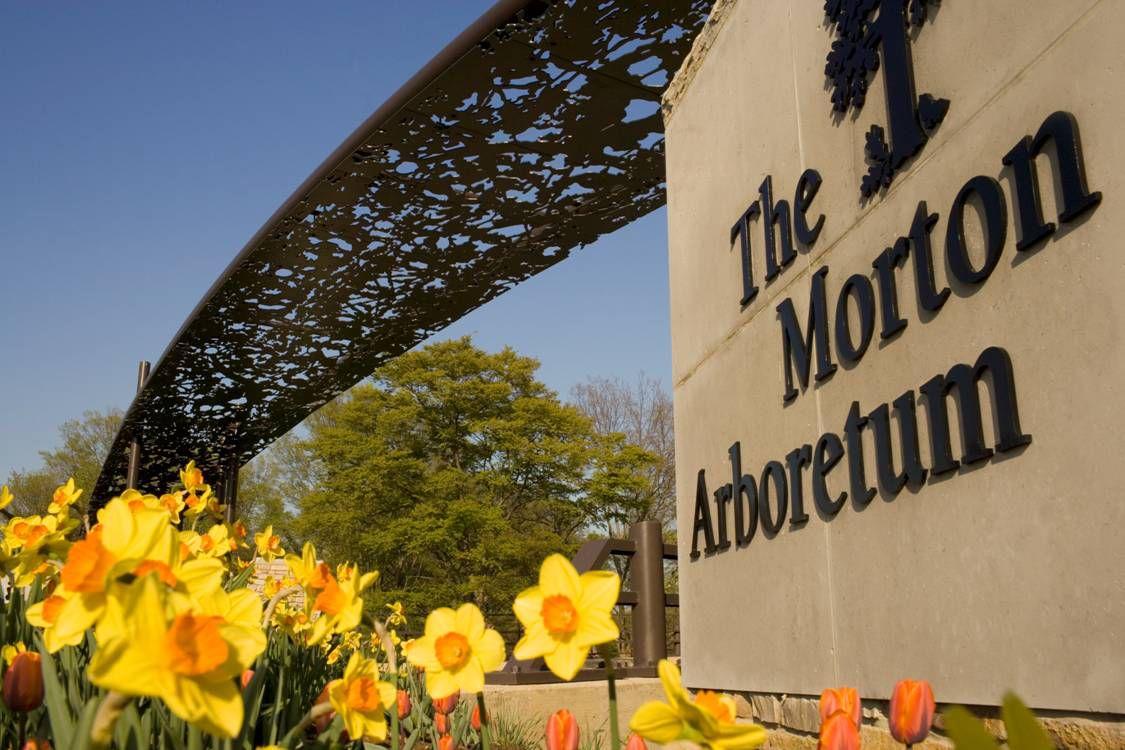 The Morton Arboretum inLisle, Illinois. | DuPage County Convention & Visitors Bureau