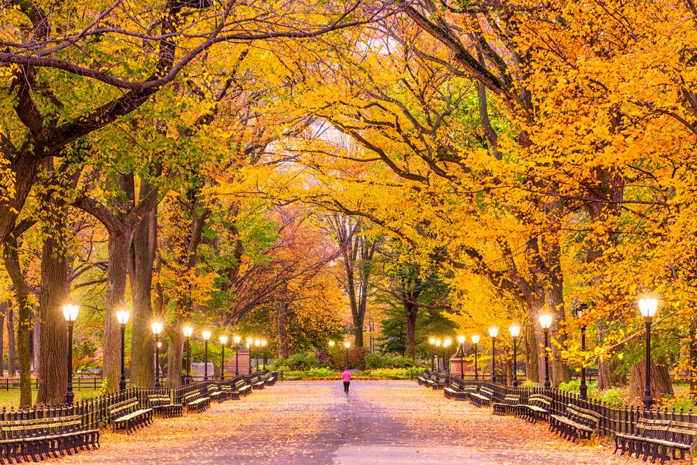Where to see fall foliage in New York City - Curbed NY